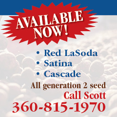 AVAILABLE NOW, Red LaSoda, Satina, Cascade, all generation 2 seed, Call Scott 360-815-1970