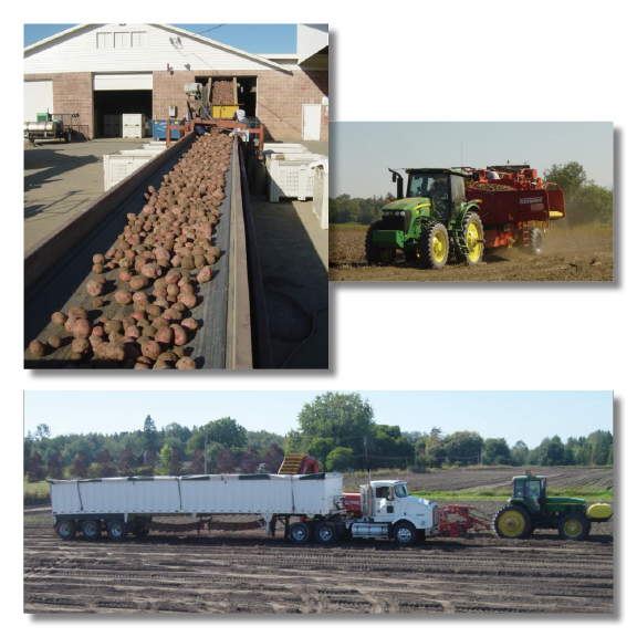 potato fields, potato farms suppliers